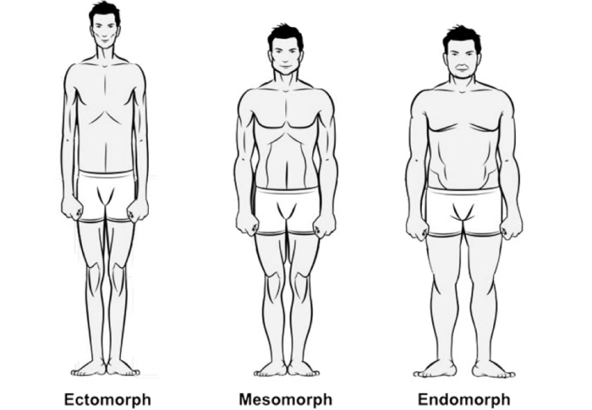 ectomorph.png