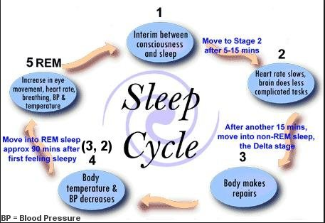 Sleep-Cycles.png