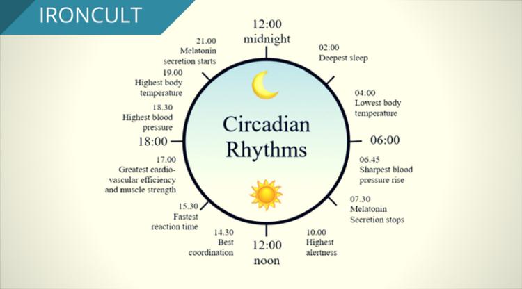 circadian.png
